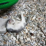 Kitten at the Backpackers Hostel